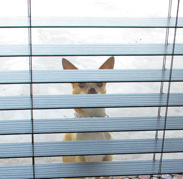 Rita Wanting In
