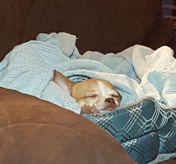 Rita Sleeping