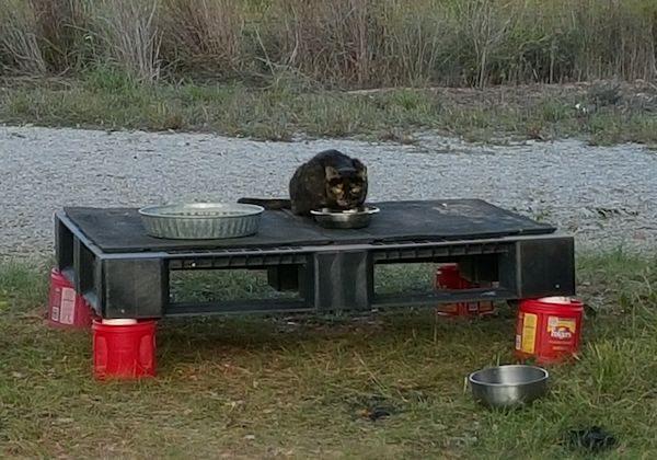 Dining Platform