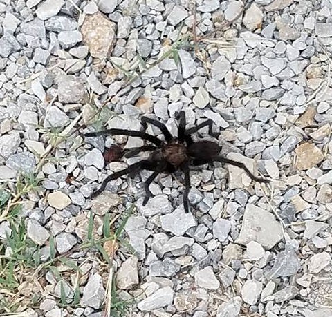 Texas Critters